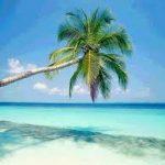 immagine palma